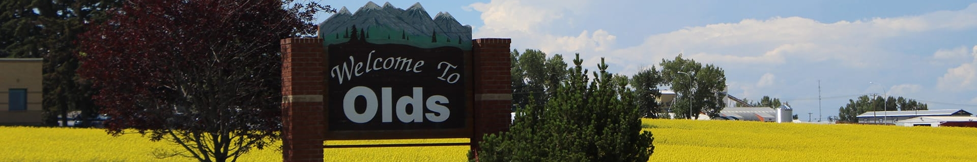 'Welcome to Olds' sign amidst a bright yellow canola field