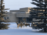 Deer Meadow; Playground; School; Chinook's Edge