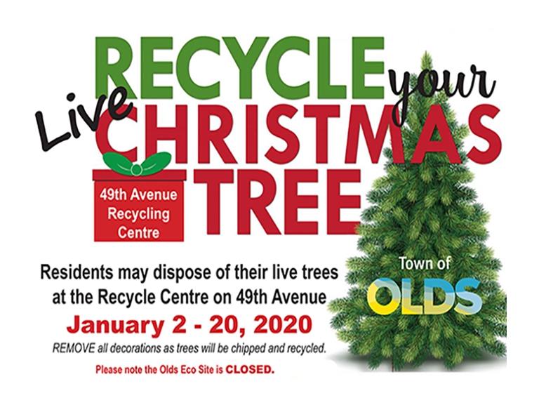 Live christmas tree recycling
