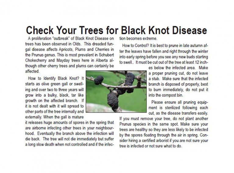 how to control black knot disease